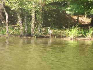 Canoeing 015