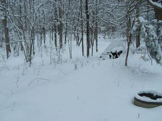 Snow 011